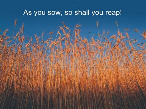 As you sow so shall you reap school essays college jpg 728x546